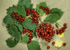 Hawthorn. Dry herb for use in alternative medicine, phytotherapy royalty free stock images