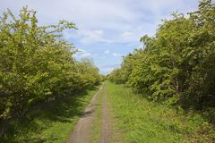 Hawthorn hedgerows by the disused railway track at Kiplingcotes. Nature walk on a disused railway line at Kiplingcotes in the Yorkshire Wolds with hawthorn Royalty Free Stock Image