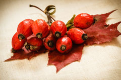Hawthorn and maple leaf on wooden rustic table background. Rose hips haw fruit. Royalty Free Stock Images