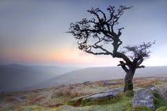 Hawthorn no nascer do sol Imagem de Stock Royalty Free