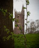 Hawthorn and a silhouette of a cathedral stock photography