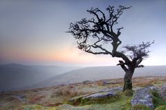 Hawthorn at sunrise Royalty Free Stock Image