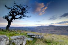Hawthorn at sunrise stock image