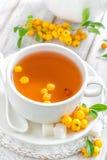 Hawthorn tea Royalty Free Stock Photos