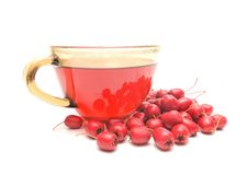 Hawthorn tea and ripe fruits of hawthorn. On white Royalty Free Stock Image