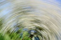 Hawthorn Tree - Abstract Spiral Effect Background. A hawthorn tree with white blossom taken using a long exposure with a turning motion to create a spiral effect Stock Photography
