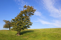 Hawthorn tree Stock Photos