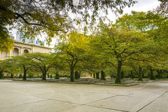 Hawthorn trees in Chicago Royalty Free Stock Images