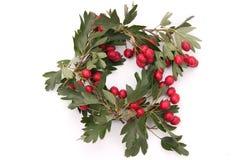Hawthorn wreath Stock Photography