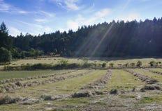 Hay готовое для тюковать на острове Saltspring, BC Стоковое Изображение