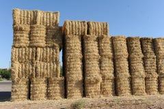 Hay пачки штабелированные вверх в середине поля сена Стоковое Фото