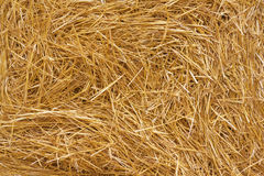 Hay. Texture of hay as background stock image