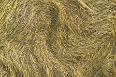 Hay Stock Photos