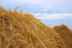 Hay. Against a background of the sky royalty free stock photo