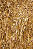 Hay. As straw-coloured backgroung royalty free stock photos