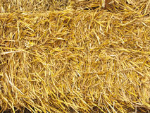 Hay. Bale of autumn hay drying in the sunshine stock image