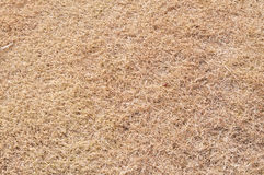 Hay. Dried straw as a background Royalty Free Stock Photography
