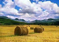 Hay Royalty Free Stock Photography