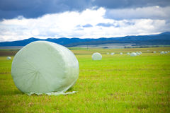 Hay. Bales wrapped in plastic sheet, under cloudy autumn sky, harvest Royalty Free Stock Photos