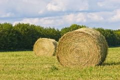 Hay Royalty Free Stock Images