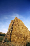 Hay. Armful of hay royalty free stock photos