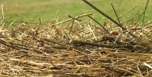 Hay. Dried hay and green grass Stock Photos