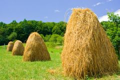 Hay. Piles of hay in a farmland Stock Photography