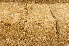 Hay. Closeup golden hay stack for textured background Stock Photos