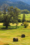 Hay. Cut hay on a ranch in late summer Royalty Free Stock Photos