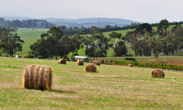 Hay. Rolls of Hay spread out in a winery in Coldstream, Yarra Valley in Victoria, Australia Stock Images