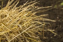 Hay. Agriculture dry feed photography horizontal Stock Photography