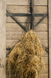 Hay as forage hung in a net Royalty Free Stock Photo
