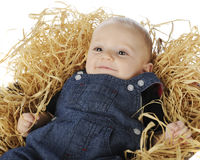 Hay Baby Royalty Free Stock Photo