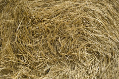 Hay Background Stock Photos