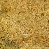 Hay background Royalty Free Stock Photography