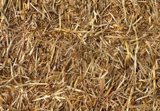 Hay Background Stock Images