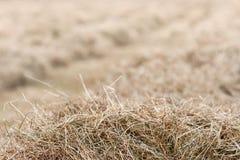 Hay Background Stock Photo
