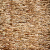 hay background Stock Photography