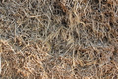 Hay background. Hay , dry glass close up background Stock Image