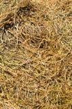 Hay background Stock Photos