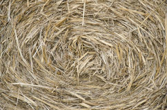 Hay background Royalty Free Stock Image