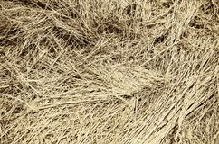 Hay Background Royalty Free Stock Photo