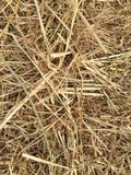 Hay background picture. Background wallpaper of hay straw in colour Stock Photo