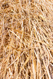 Hay background - straw texture Stock Image