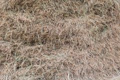 Hay background texture. Royalty Free Stock Photos