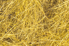 Hay backround texture. Yellow and dry hay backround texture Stock Photo