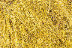 Hay backround texture. Yellow and dry hay backround texture Royalty Free Stock Photos