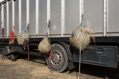 Hay bags hung on the back of the truck. Feed for horses stock photography