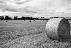 Hay Bail Stock Images