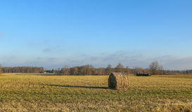 Hay bail. In the field royalty free stock photo